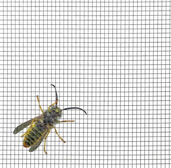 Insektenschutz Stahlgewebe
